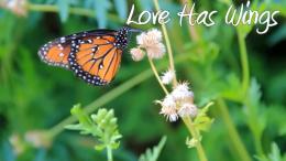 lovehaswings
